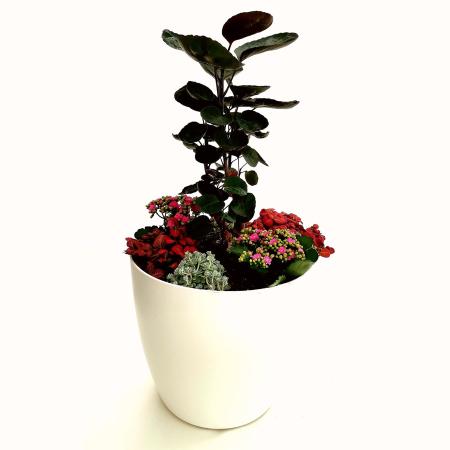 Eine Pflanzenurne als Zimmergrabpflanze im Topf als Indoor-Gedenkstätte Ihres Haustieres