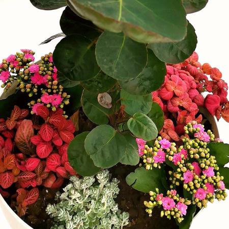 Zimmergrab-Pflanze Ihres verstorbenen Haustieres mit verschiedenen Pflanzenarten oder Baumarten
